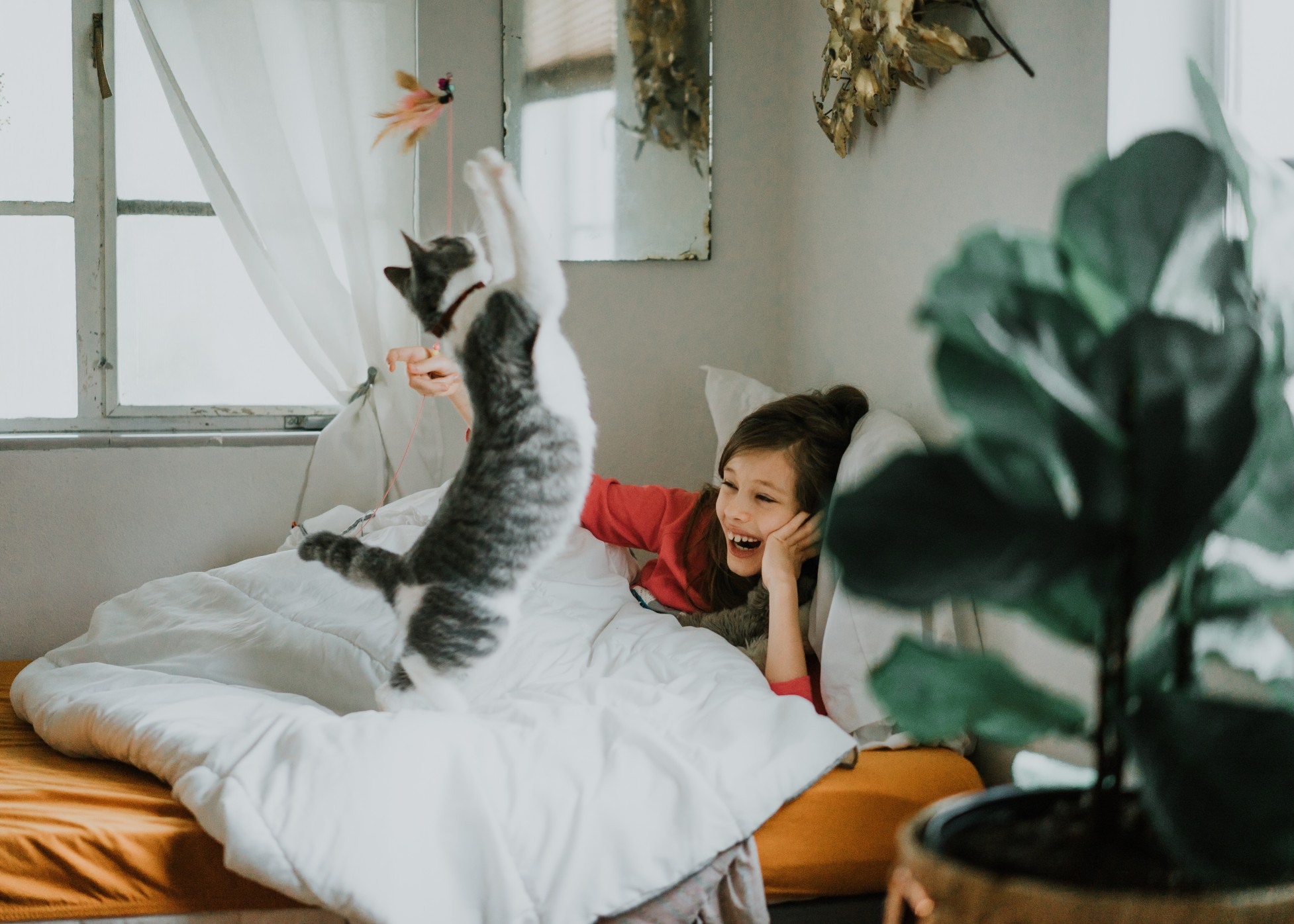 chat joue