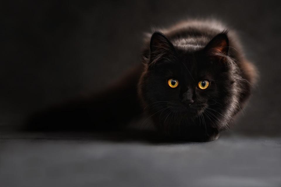 Le chat se considère comme le maître du lieu