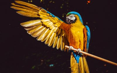 L'oiseau qui s'adapte à votre environnement