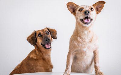 Comment faire pour éviter la perte de votre chien ?