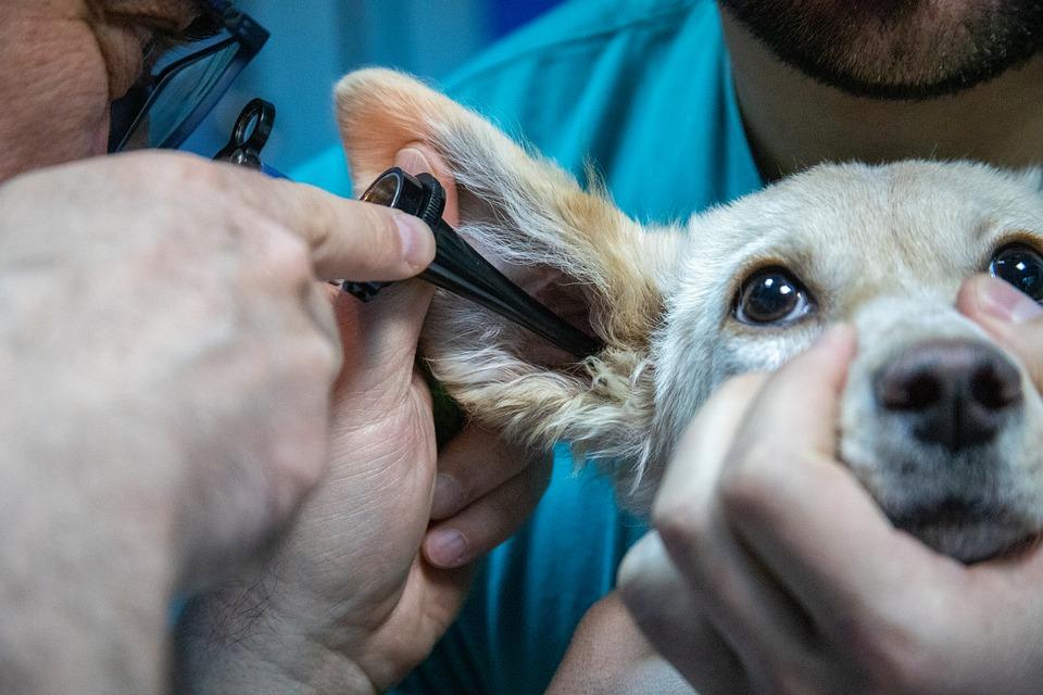 Quels sont les avantages de la consultation veterinaire a distance
